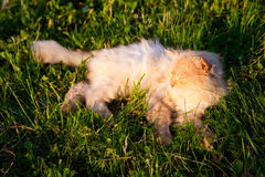 Cat. The red cat sleeps in a grass Stock Photos