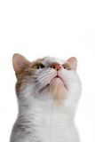 Cat. A cat that is looking up stock images