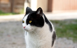 Cat. This image shows a portrait from a cat stock image