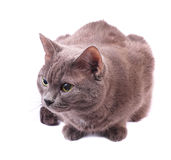 Cat. Fifteen cat on a white background. Animals Stock Photos