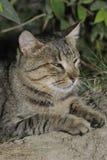 Cat. Close up shot of a domestic cat Stock Photo
