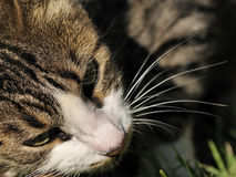 Cat. Close up shot of a domestic cat Stock Photos