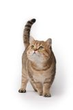 Cat. Beautiful cat on white background Royalty Free Stock Photos
