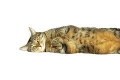 Cat. Lying cat isolate on white Stock Photos
