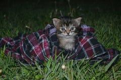 黑cat1 库存照片
