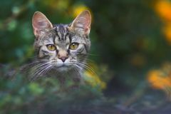 Cat. Sitting in the bushes Royalty Free Stock Photo
