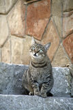 Cat. Sitting on the stone stairs in Cefalu old town in Sicily Royalty Free Stock Photography