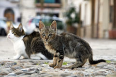 Cat. Sweet little cat sitting on the street in one of Sicilian towns Royalty Free Stock Images