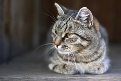 Cat. In a country house Stock Photos