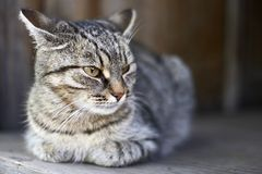 Cat. In a country house Stock Images