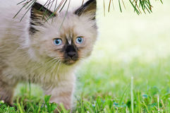 Cat. A little cat in garden royalty free stock photography