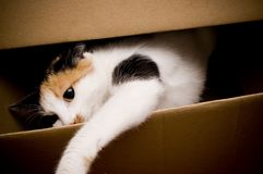 Cat. Playing in a on box Royalty Free Stock Photo