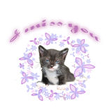 Cat. Baby cat with flowers and inscription I miss you Royalty Free Stock Photography