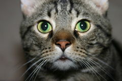 Cat. A picture of my cat Stock Photos