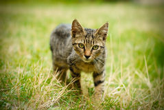Cat. A cat who looking for something to eat, in a spring season Royalty Free Stock Image