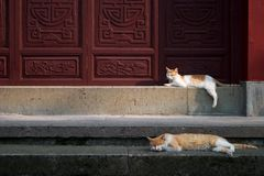 Cat. Two cats in the jingsi temple Royalty Free Stock Photo