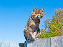 Free Cat Royalty Free Stock Photo - 13490295