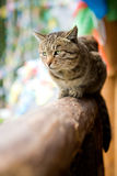Cat. A cat sitting there, waiting for prey Royalty Free Stock Photo
