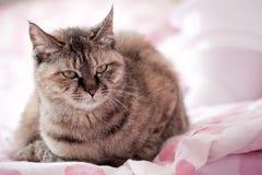 CAT Lizenzfreies Stockfoto