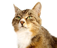 Cat. On a white background Stock Photography