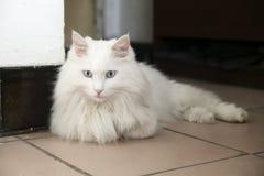 Cat. Cute cat lying on the ground Stock Photos