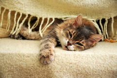 Cat. A lovely cat under blanket Royalty Free Stock Photos