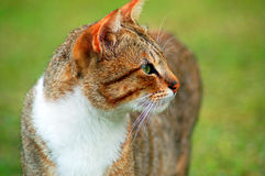 Cat. Close up of the cat Royalty Free Stock Images