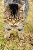 Cat. Close up of a cat Stock Photography
