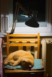 Cat. The cat is heated under a lamp Stock Photo