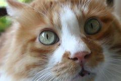 Cat. Close-up of a sweet cat outdoors Stock Photos