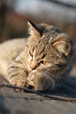 Cat. Small young cat called Furcia is photographed in my parents garden during sunny morning Royalty Free Stock Photos