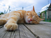 Cat. The red cat sleeping on a wooden table Royalty Free Stock Photo