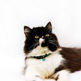 Cat. Looking up royalty free stock image