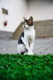 Cat. Cute cat enjoying his life outdoors Royalty Free Stock Photo