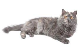 Cat. Stock Image