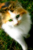 Cat. Green Eyes of the cat stock images