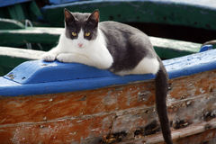 Cat. Lying on an old boat in Italian port Stock Photography