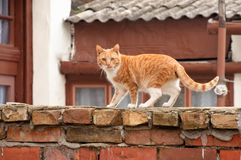 Cat royalty free stock photo
