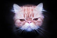 Cat. The red cat hunts in the dark Stock Photos