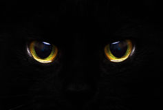 Cat. 's eyes glowing in the dark