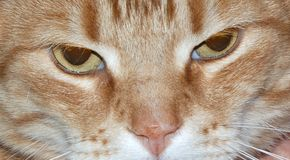 Cat. Close up of head of cat Royalty Free Stock Image