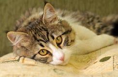 Free Cat Stock Image - 19207421
