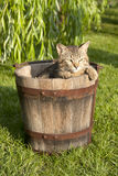 Cat. In the water barrel Royalty Free Stock Photography
