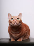Cat. A cat in the white background Stock Photo