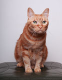 Cat. A cat in the white background Stock Images