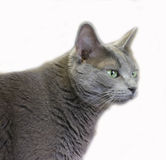 Cat 2. Profile of gray cat stock images
