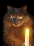 Cat-2. A cat and a candle Royalty Free Stock Photo