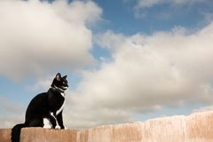 Cat #2 Stock Photo
