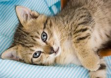 cat Στοκ εικόνα με δικαίωμα ελεύθερης χρήσης