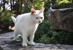 Free Cat Stock Images - 20153134